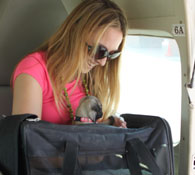 Taking pets and kennels on your belize local domestic flights.